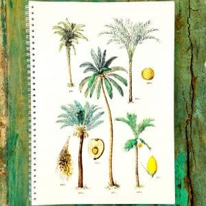 Cahier multi-palmiers