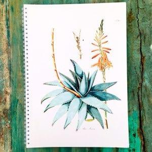 Cahier succulente